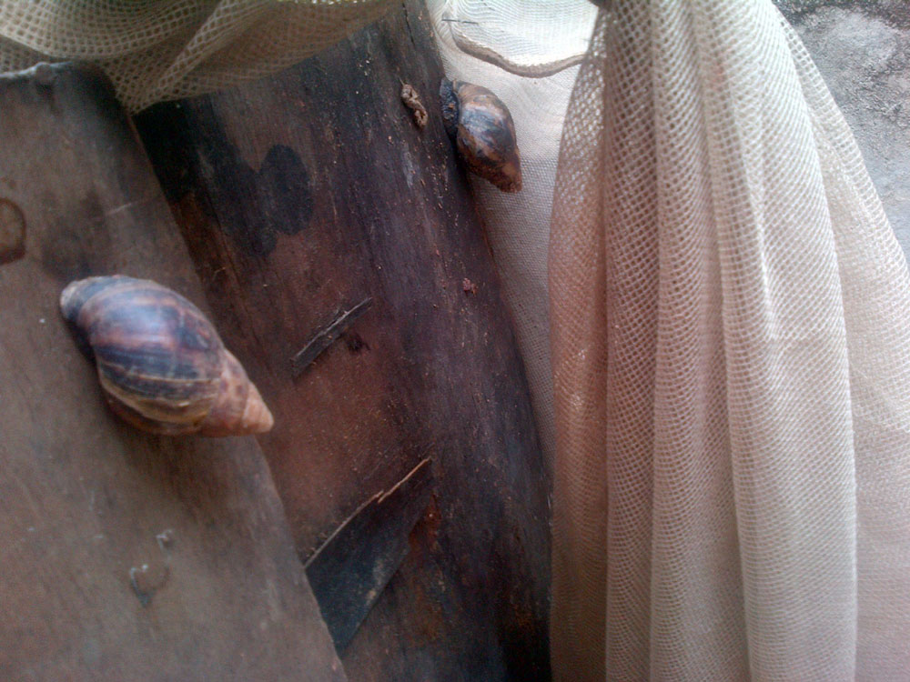 olu-snails-2