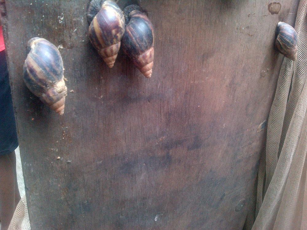 olu-snails-3