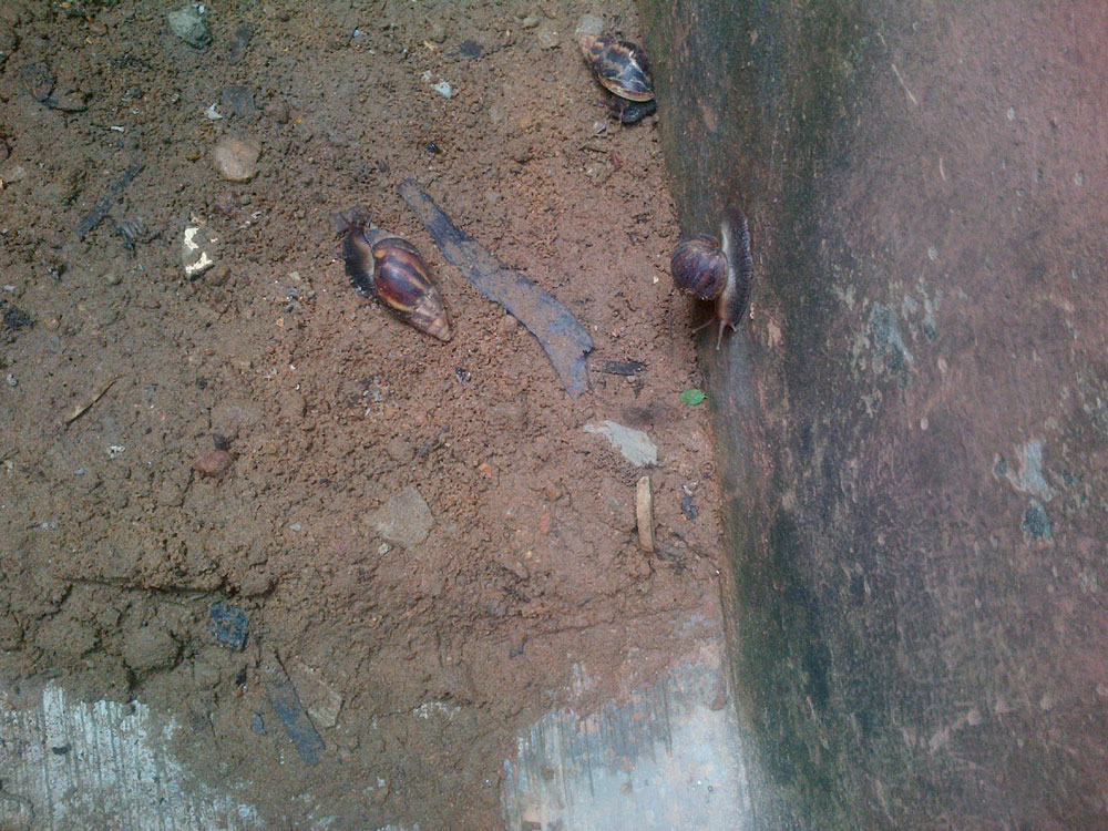 olu-snails-5