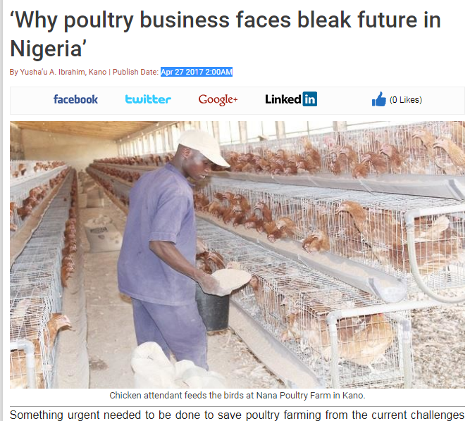 poultry-bi-bleak