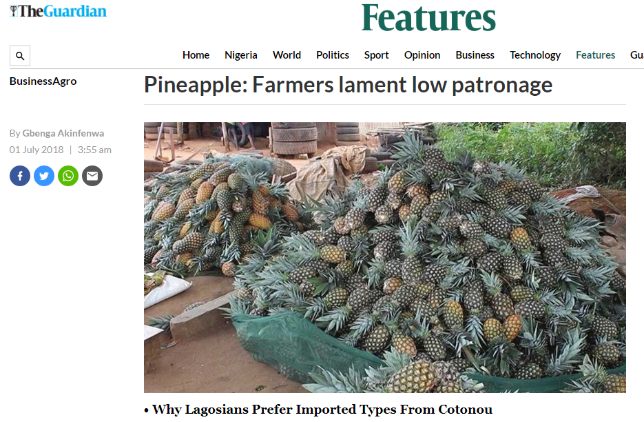 pineapple-farmers-lament